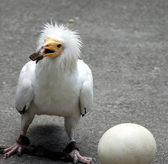 tumblr lc76inqq9S1qf2p8io1 4001 คุณเคยเห็น Angry Birds ตัวจริงแล้วหรือยัง ?