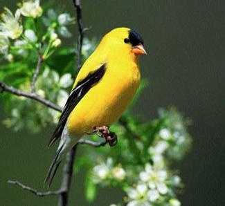 tumblr lc76ova6p01qf2p8io1 4001 คุณเคยเห็น Angry Birds ตัวจริงแล้วหรือยัง ?