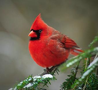 tumblr lc76riBECp1qf2p8io1 4001 คุณเคยเห็น Angry Birds ตัวจริงแล้วหรือยัง ?