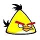 yellow bird คุณเคยเห็น Angry Birds ตัวจริงแล้วหรือยัง ?