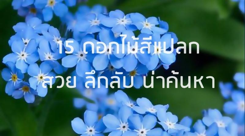 ดอกไม้สีแปลก_banner
