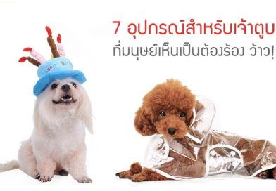 แบบนี้ก็มีด้วย…. 7 อุปกรณ์สุนัข ที่มนุษย์เห็นเป็นต้องร้อง ว้าว!